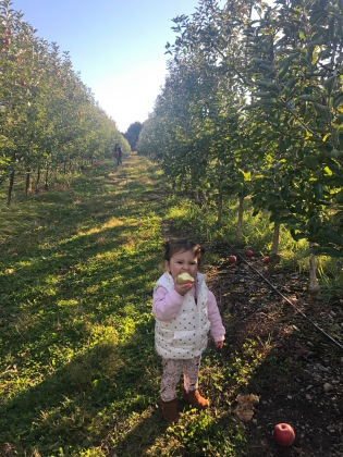 apple picking 2.jpg
